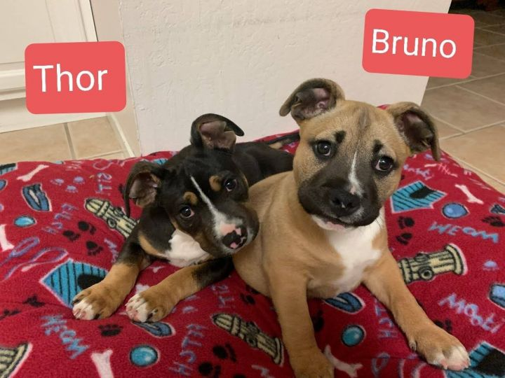 Bruno and Thor 1