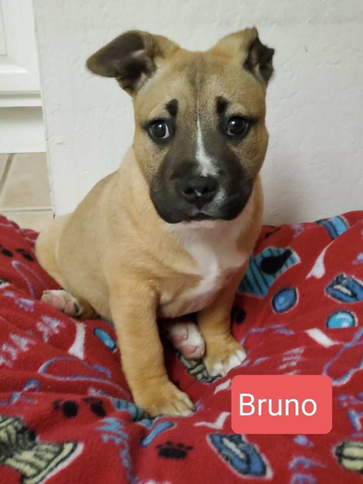 Bruno and Thor 5