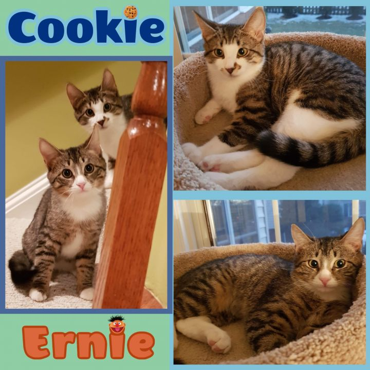 Cookie and Ernie 2