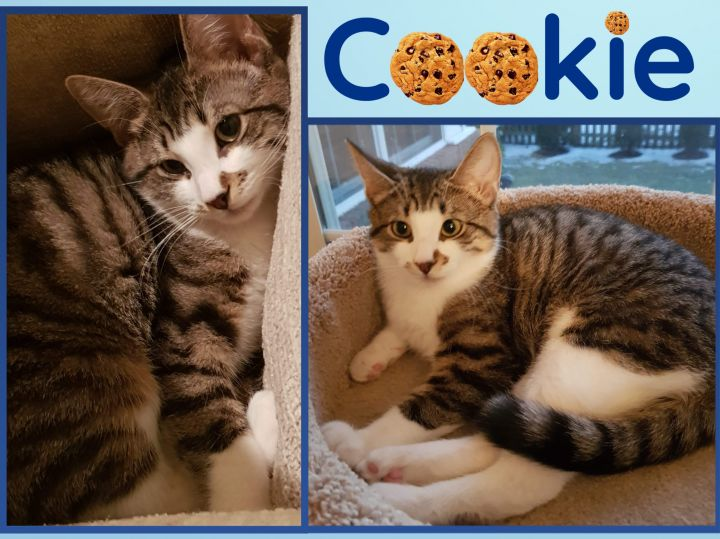 Cookie and Ernie 3