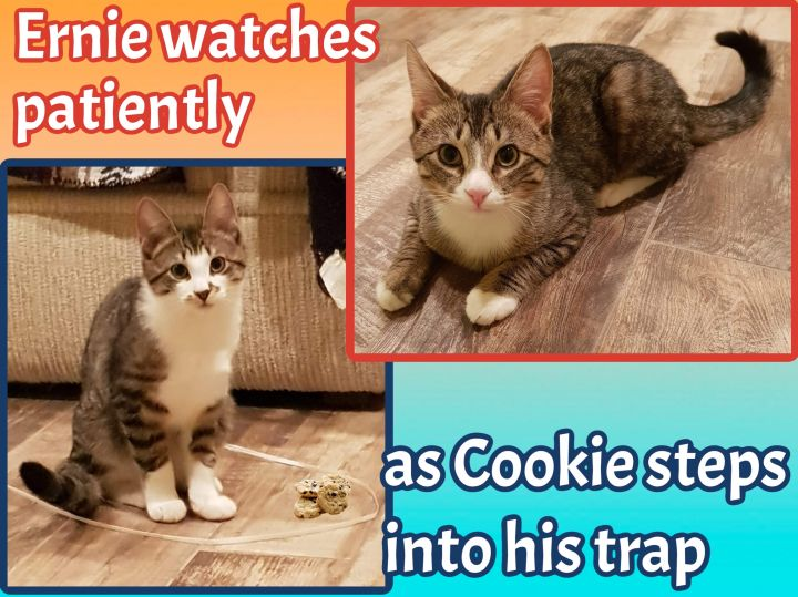 Cookie and Ernie 5