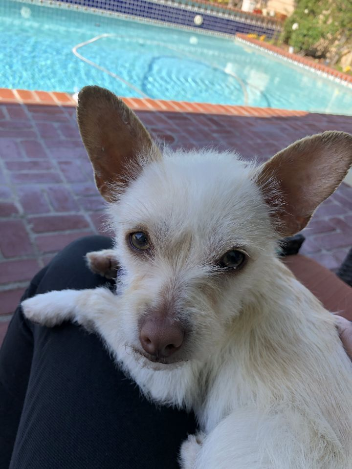 Patrick, an adopted Terrier Mix in San Diego, CA