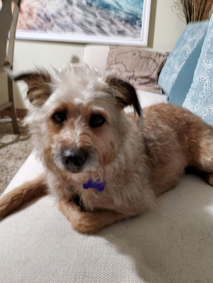 Maggie, an adopted Terrier Mix in San Diego, CA