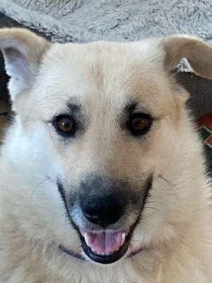Photo of Layci