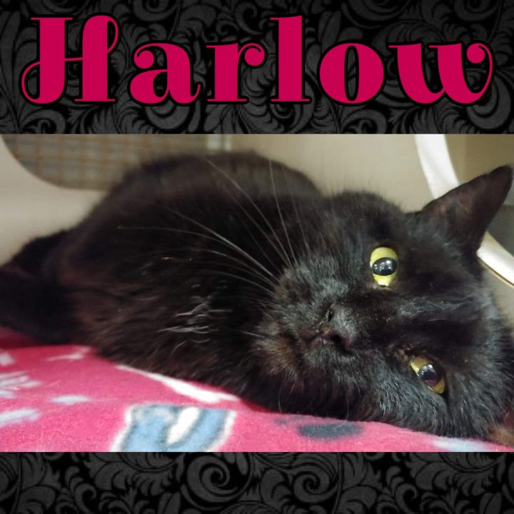Harlow 3
