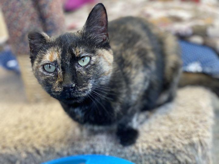 Penelope 1