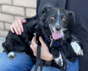 Tony Spaniel Dog