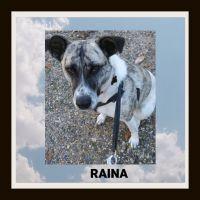 RAINA 1