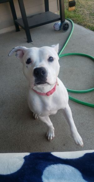 I am EleanorI am a young and playful dogI recently had 9 puppies They kept me very busy