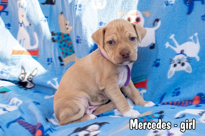 Mercedes, an adopted Hound & Terrier Mix in Omaha, NE