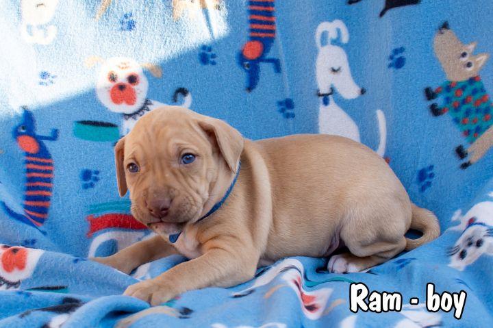 Ram 2