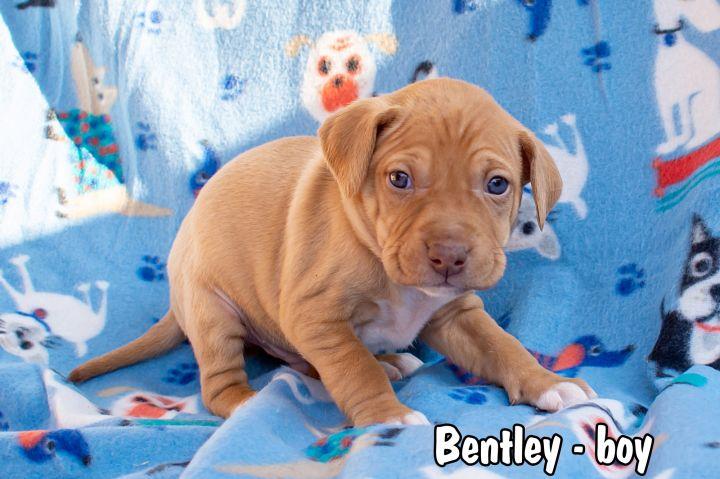 Bentley 2