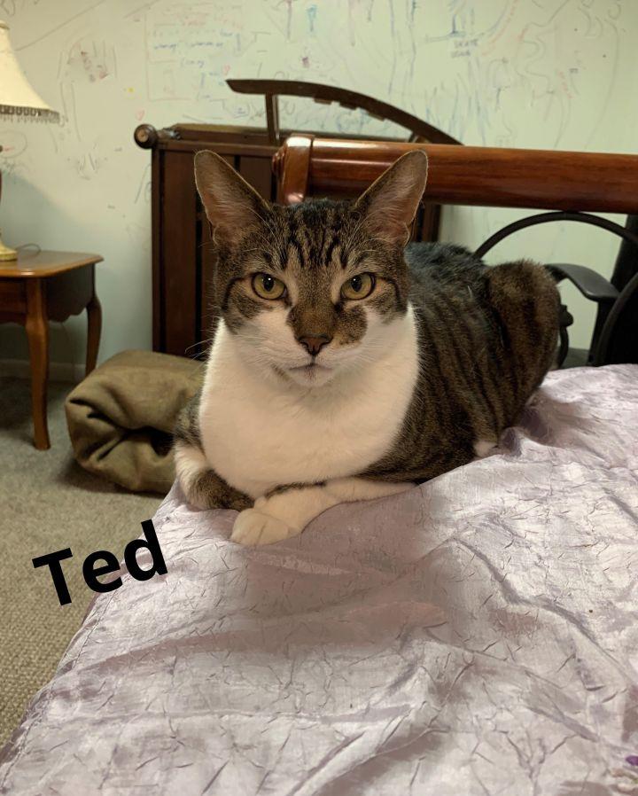 Ted & Damon (bonded pair) 2