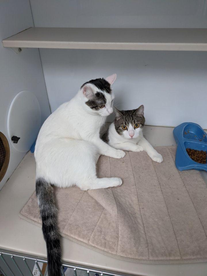 Mai and Tai 2