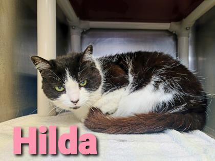 Hilda 1