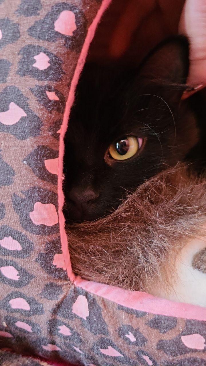 Tom Cat 4