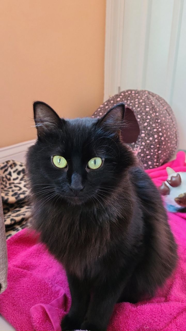 Tom Cat 1