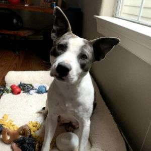 Hi prospective Adopter My name is Mabel Id like to share some research Ive done on what to look