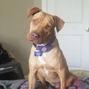 Meet Pinwheel or PennyPenn Penn for short accoring to her foster Theres been so much good news o
