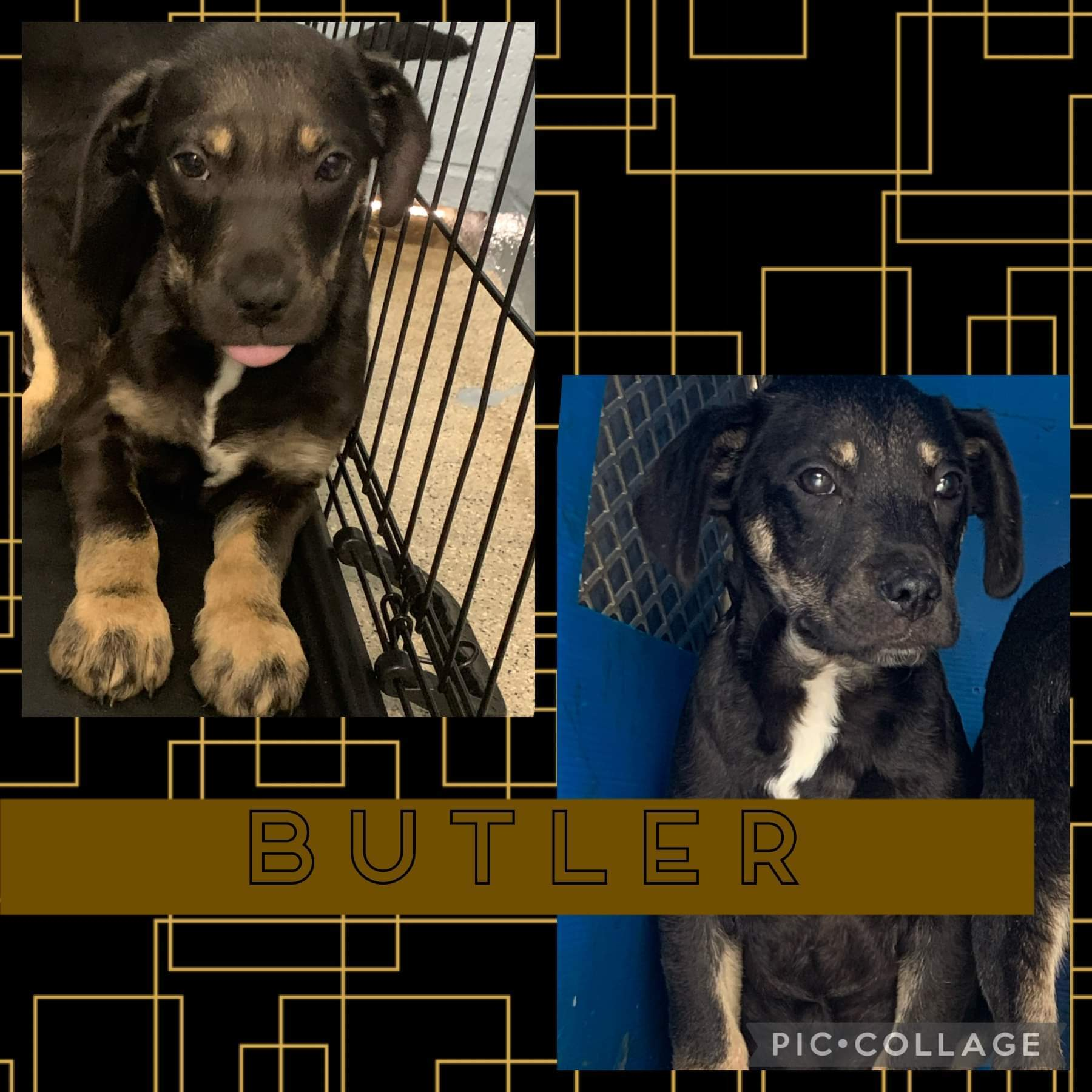 Butler detail page