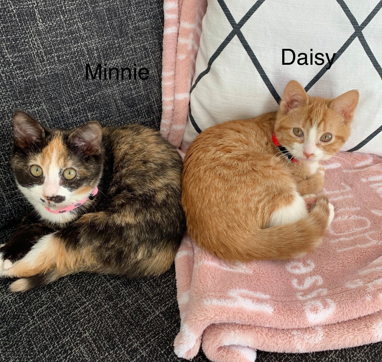 Minnie And Daisy detail page