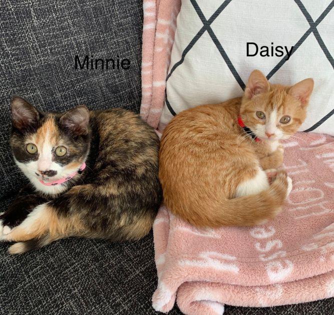 Minnie and Daisy