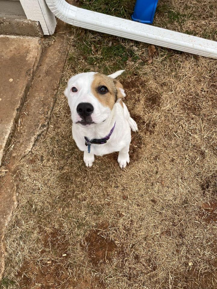 Margaret, an adoptable Pit Bull Terrier Mix in Oklahoma City, OK