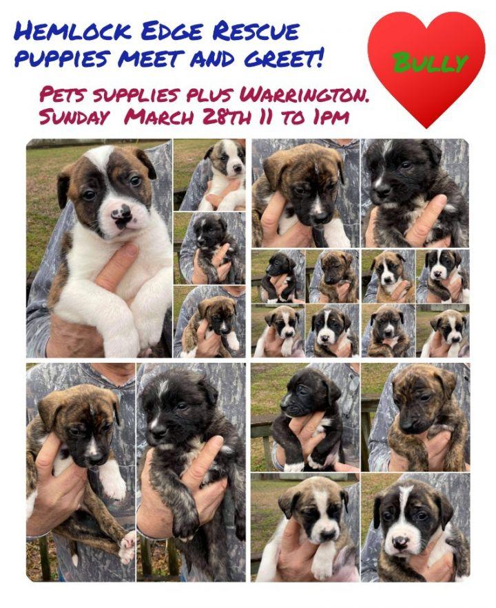 Puppies Puppies!! 6