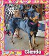 Glenda APPLICATION IN REVIEW