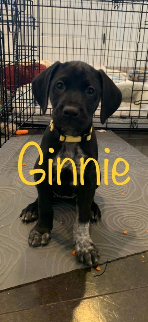 Ginnie 1