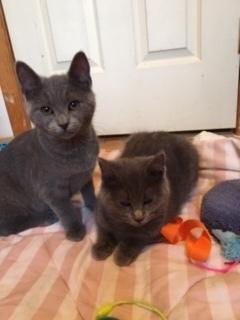 Davey & Daphne 2
