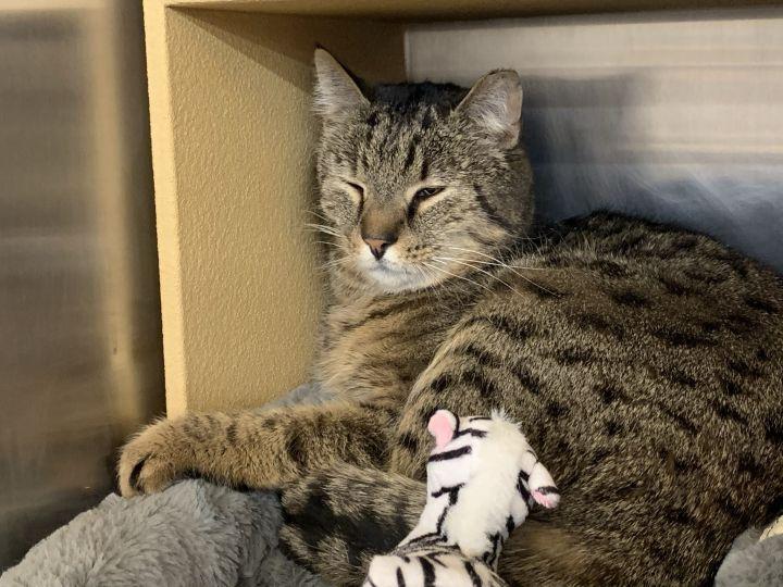 Everett -Adoption Pending! 6