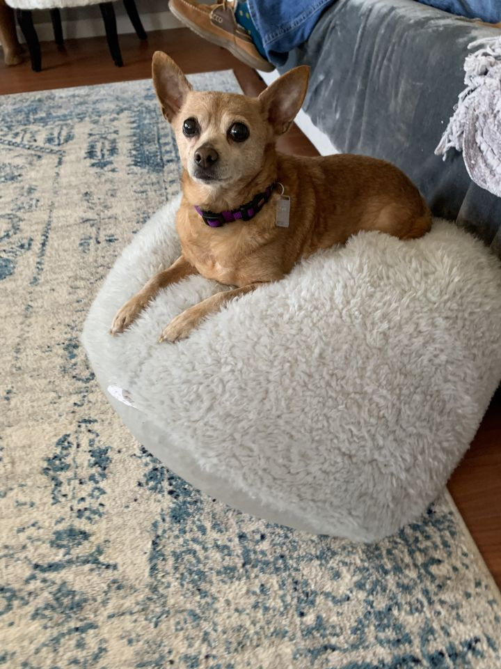 Buttercup - APPROVED ADOPTER 1