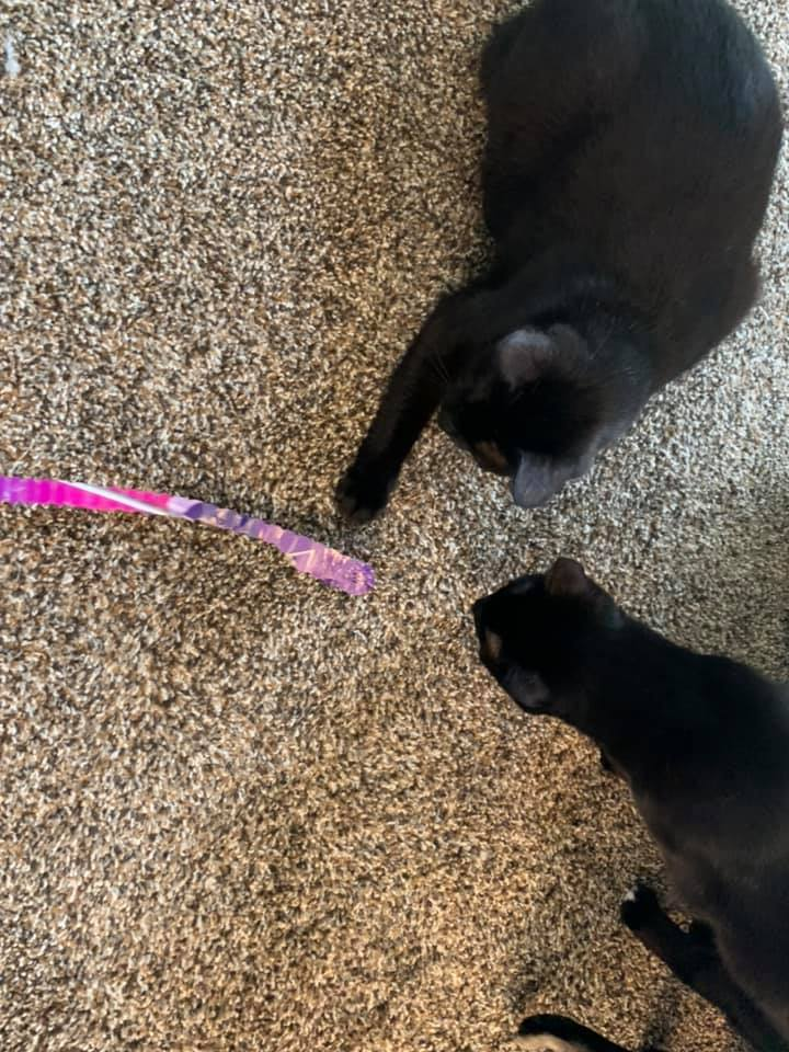 Salem and Hops 2