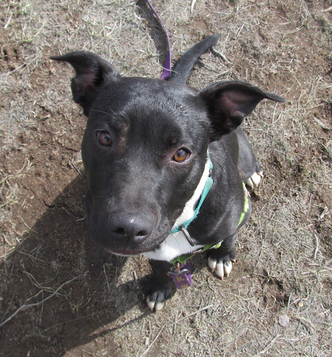 Annie, an adoptable Mixed Breed in Ridgway, CO