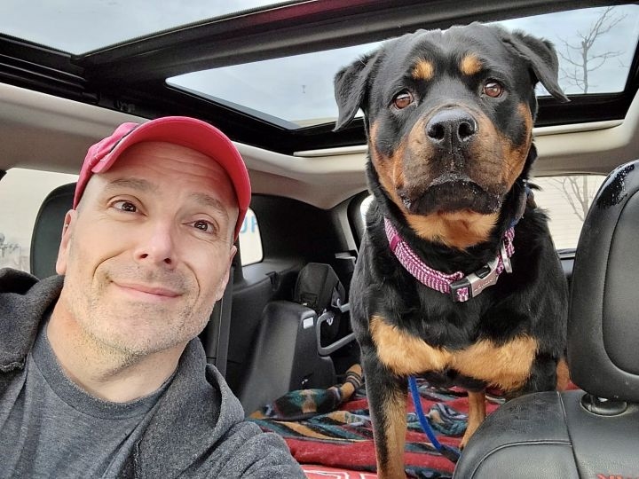 Zailey, an adoptable Rottweiler in Lincoln, NE