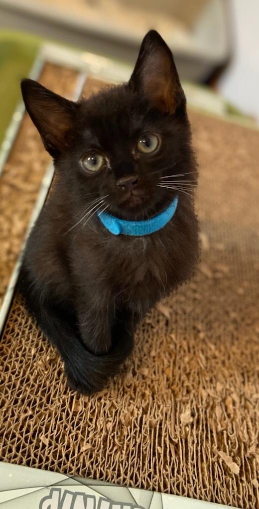 5 little black kittens 3