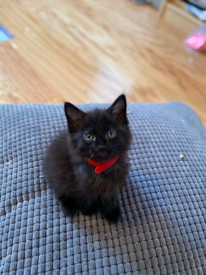 5 little black kittens 4