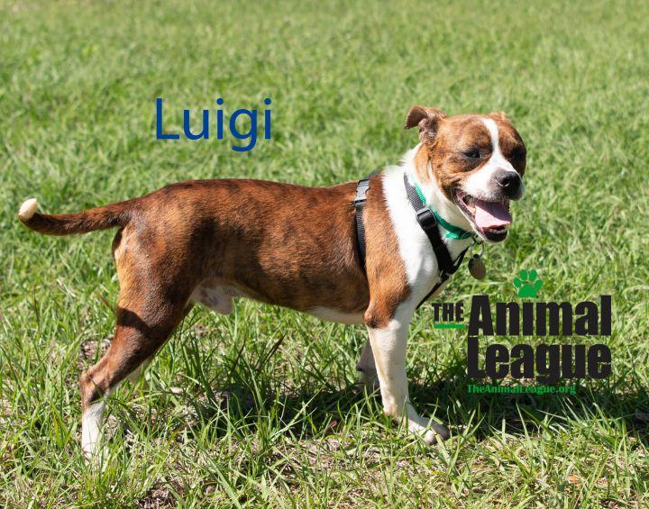 Luigi 3