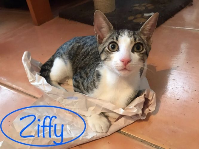 Ziffy
