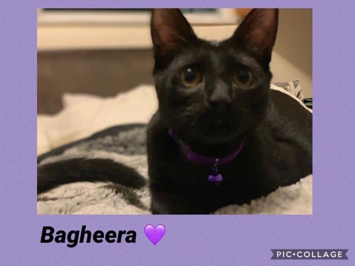 Bagheera 1