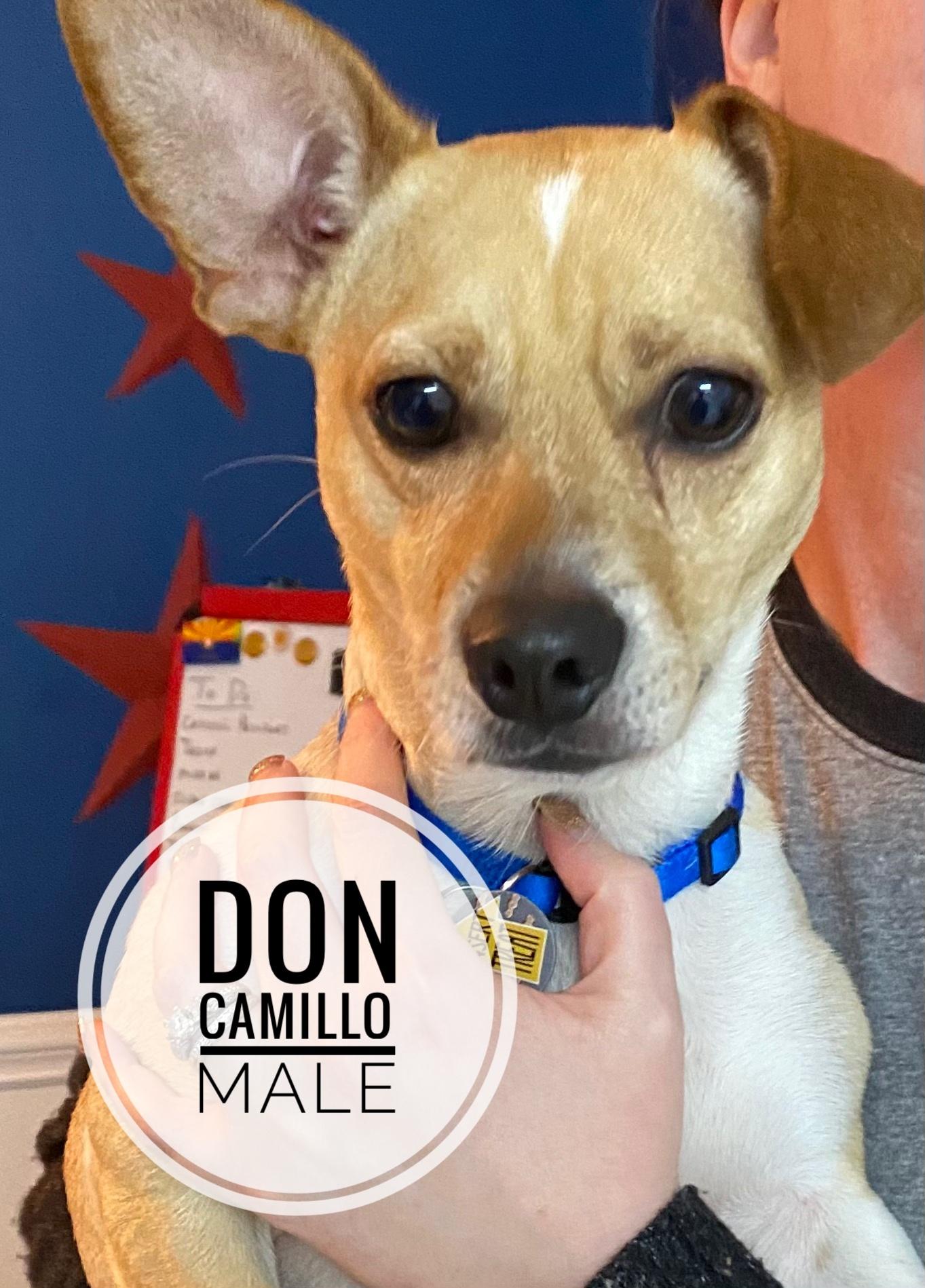 Don Camillo Society Adoption Pending detail page