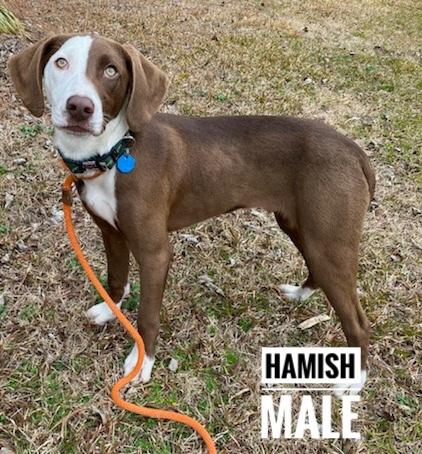 HAMISH SOCIETY 2
