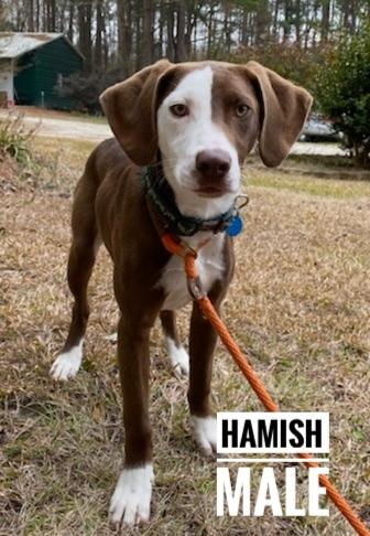 HAMISH SOCIETY 3