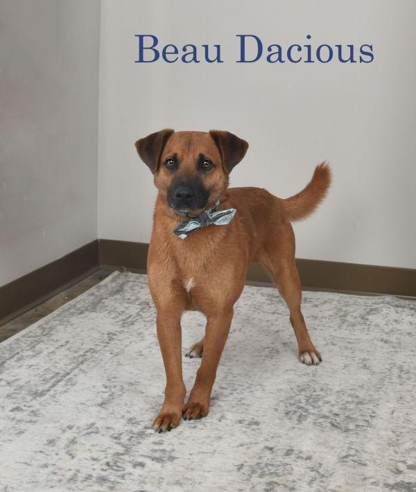 Beau Dacious