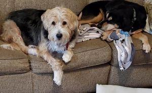 Darby & Gilmore (BONDED PAIR)