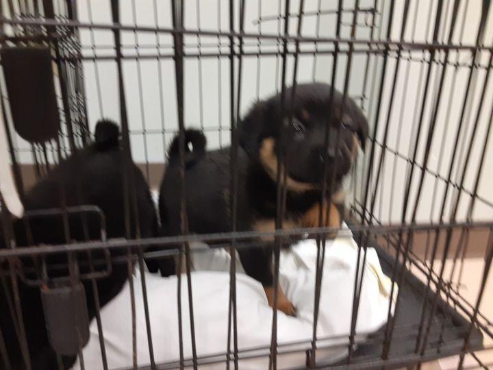 Peanut adoption pending! 2