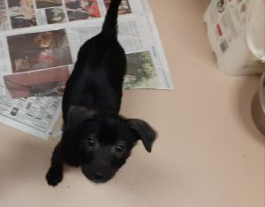 Domino adoption pending!