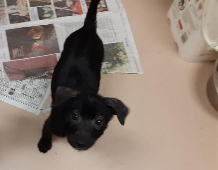 Domino adoption pending! 1