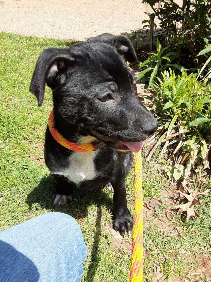 Domino adoption pending! 2